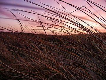Texelse duinen van Jasper van der Vos