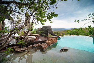 Olifant zwembad van Frans  de Best