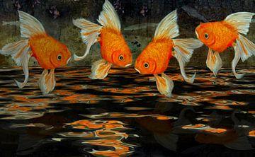 Feng Shui - Schleierfische von Christine Nöhmeier