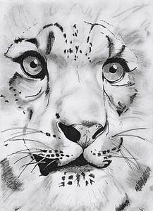 Tiger van
