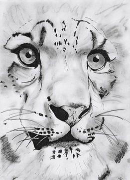 Tiger van Deb S.