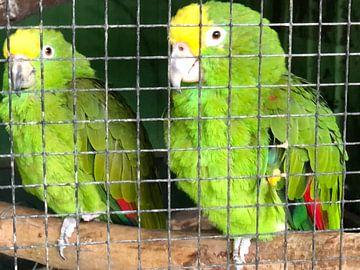 Papegaaien van tania mol