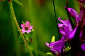 Wilde Blumen von Arno-Jan Boere
