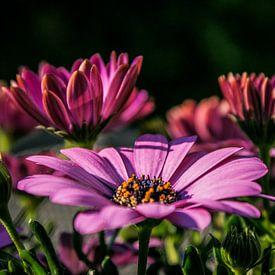 Bloemen in bloei van BTF Fotografie