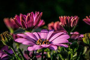Bloemen in bloei van
