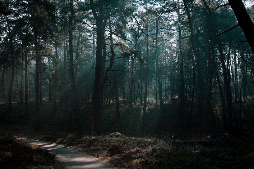 Wandeling door het bos van Patrick  van Dasler