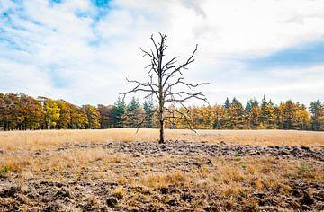 Ein einsamer Baum im Herbst von Arisca van 't Hof