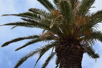 Palme auf Madeira von Chloe 23
