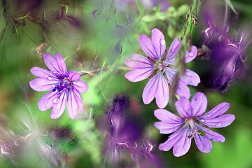 Trio de violettes von Christine GUILLET