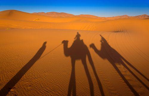 Camel ride in Marokko