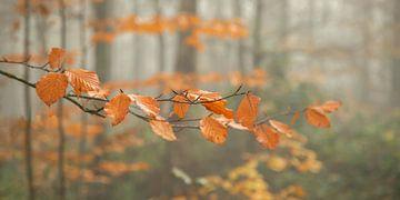 Die letzten Herbstfarben von Annie Keizer