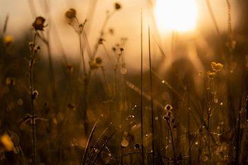 la lumière du soleil sur Tania Perneel