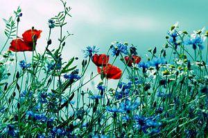 Klaprozen, korenbloemen en chamomiles vintage effect