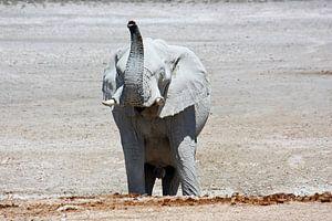 NAMIBIA ... Elephant fun III