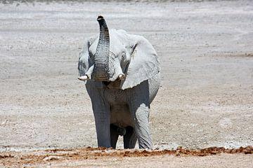 NAMIBIA ... Elephant fun III van