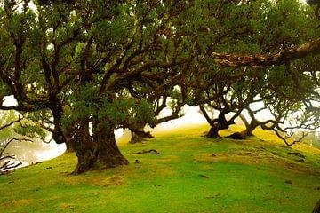 Sonnenlicht durch die Bäume auf Madeira von jonathan Le Blanc