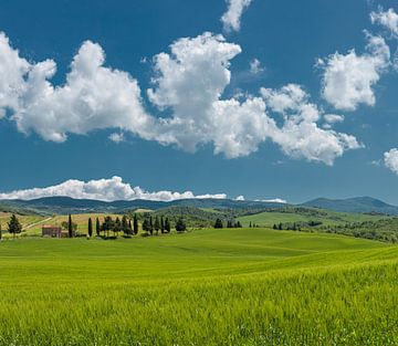 Val d'Orcia, Contignano, Toscane, Italien von Rene van der Meer