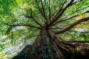 Ein alter brauner Baum mit grünen Blättern