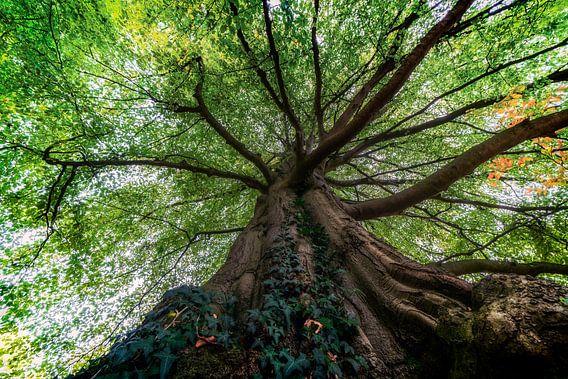 Een oude bruine boom met groene bladeren