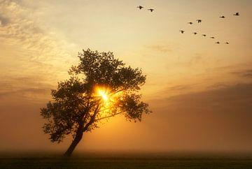 flying geese above a misty meadow sur John Stuij