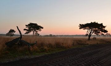 Zandweg in de morgen van Arjan van Roon