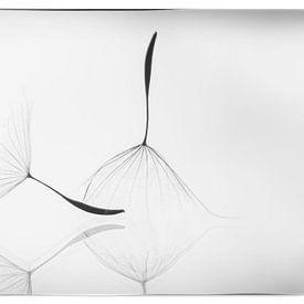 Pluizen in zwart/wit van D. Henriquez