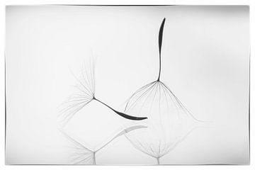Flusen in schwarz-weis von D. Henriquez