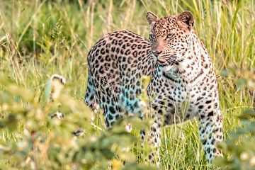 Luipaard van Trudy van der Werf
