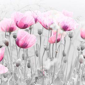 Roze klaproos in de wilde natuur van Angélique Vanhauwaert