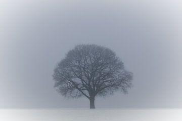 Eenzaam en koud van Bertram Bergink