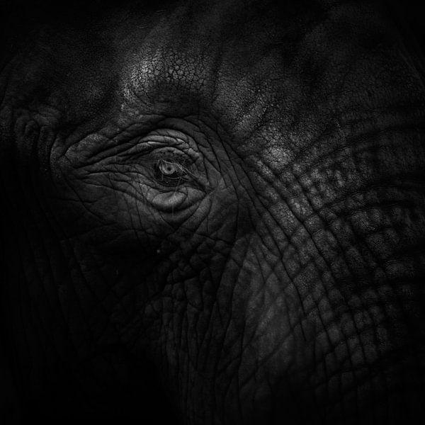 Oud oog olifant van Ruud Peters