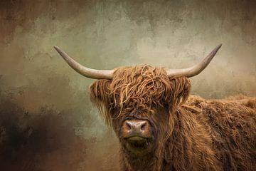 Highlander écossais sur Diana van Tankeren