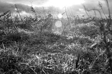 Die Sonne scheint durch die Wolken von Wouter Bos