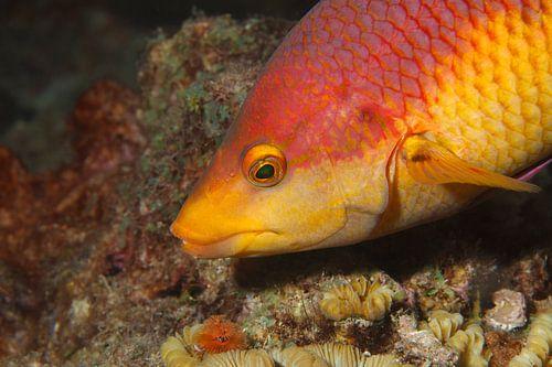 Tropische vis. van