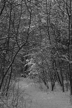 Winter in Oostvoorne van Willem Scherpenisse