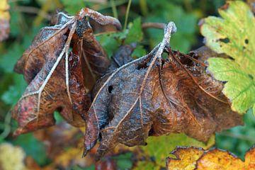 der Herbst beginnt von wil spijker