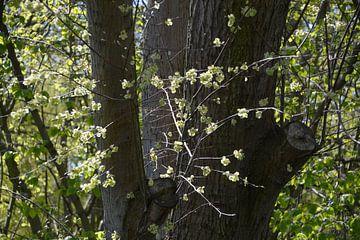 Blüte am Baum von FotoGraaG Hanneke