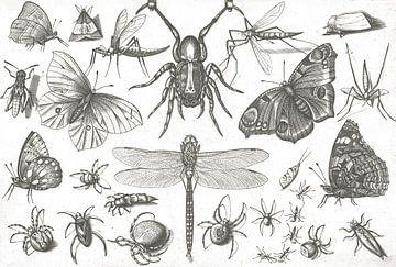 Insecten van Jacob Hoefnagel, after Joris Hoefnagel, 1630