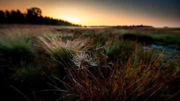 Spinnenweb tussen twee grasstengels bij zonsopkomst van Jenco van Zalk