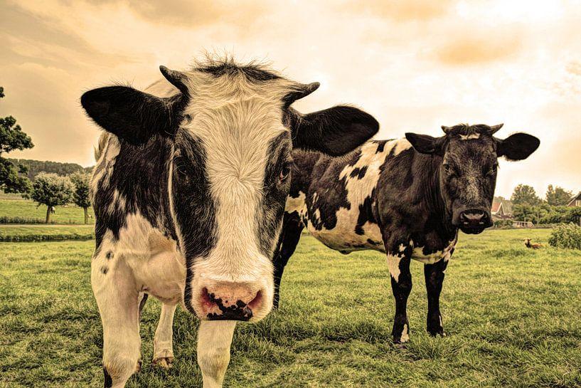 Koeien in Weiland Oud van Hendrik-Jan Kornelis