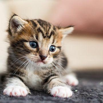 Een jonge kat prachtig in beeld van Eric de Kuijper
