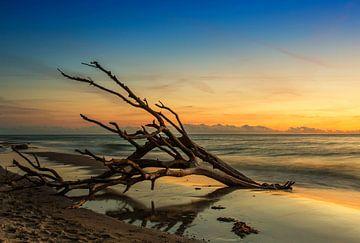 Vieux tronc d'arbre sur la plage au coucher du soleil