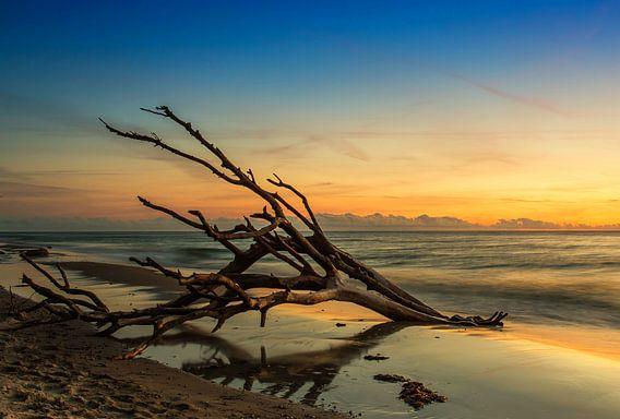 Oude boomstam op strand in zonsondergang
