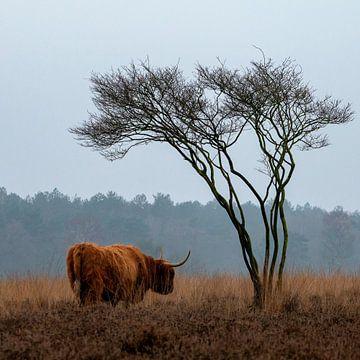 Grazer inmitten der Heide des Naturschutzgebietes Goois von Studio de Waay
