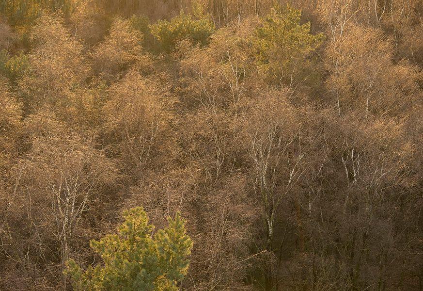 Bomen vanaf hoogte van Elroy Spelbos
