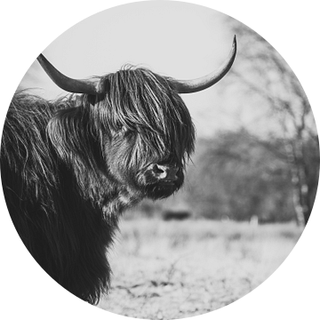 Zwart witte Schotse Hooglander. van Milou Schothuis