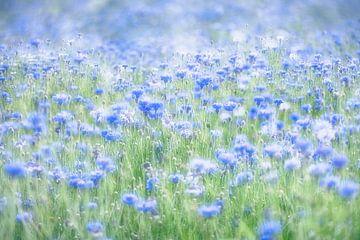 Flowerpower van Rolf Schnepp