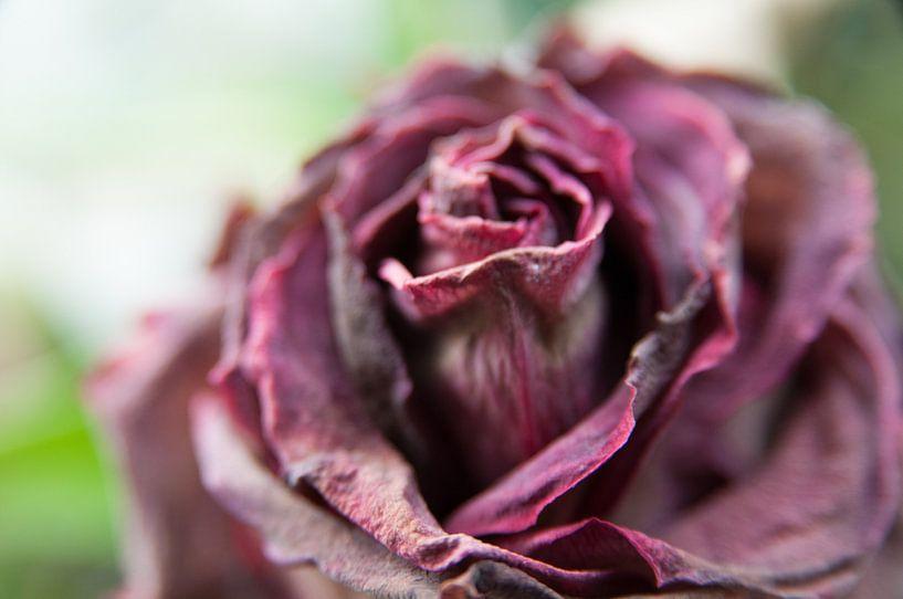 Abstracte bloem van Lieke Roodbol