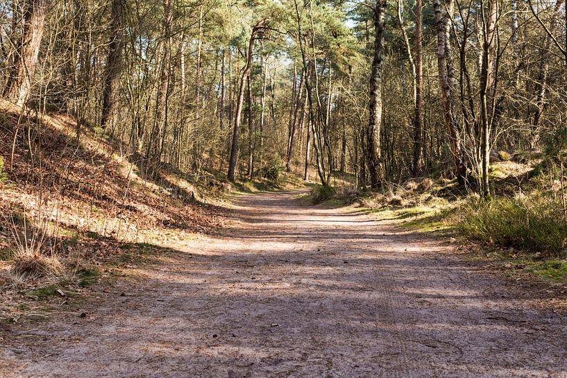 Breed wandelpad in bos Lage Vuursche van Jaap Mulder
