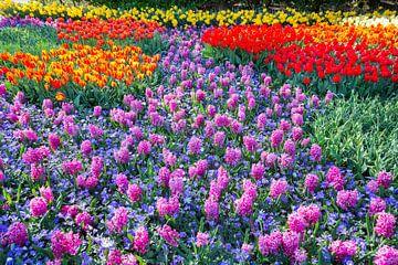 Blumenfeld mit rosa Hyazinthen und roten Tulpen im Keukenhof in den Niederlanden von Ben Schonewille